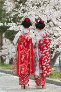 geisha flowers