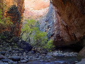 Virgin Narrows Zion 175